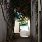 Bougainvilleas in the alleys Lamu