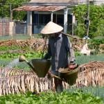 Herb garden Tra Que