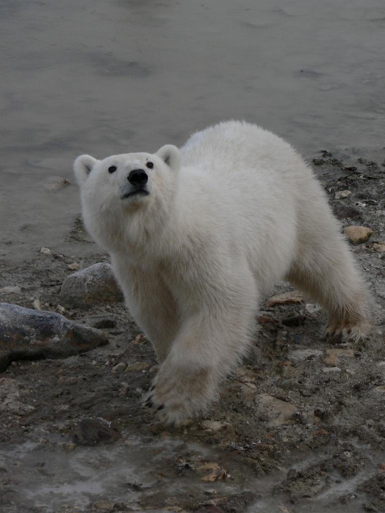Inquisitive cub