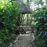 Jungle camp Belize