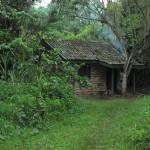 Kibale National Park Uganda