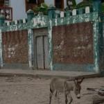 Lamu views