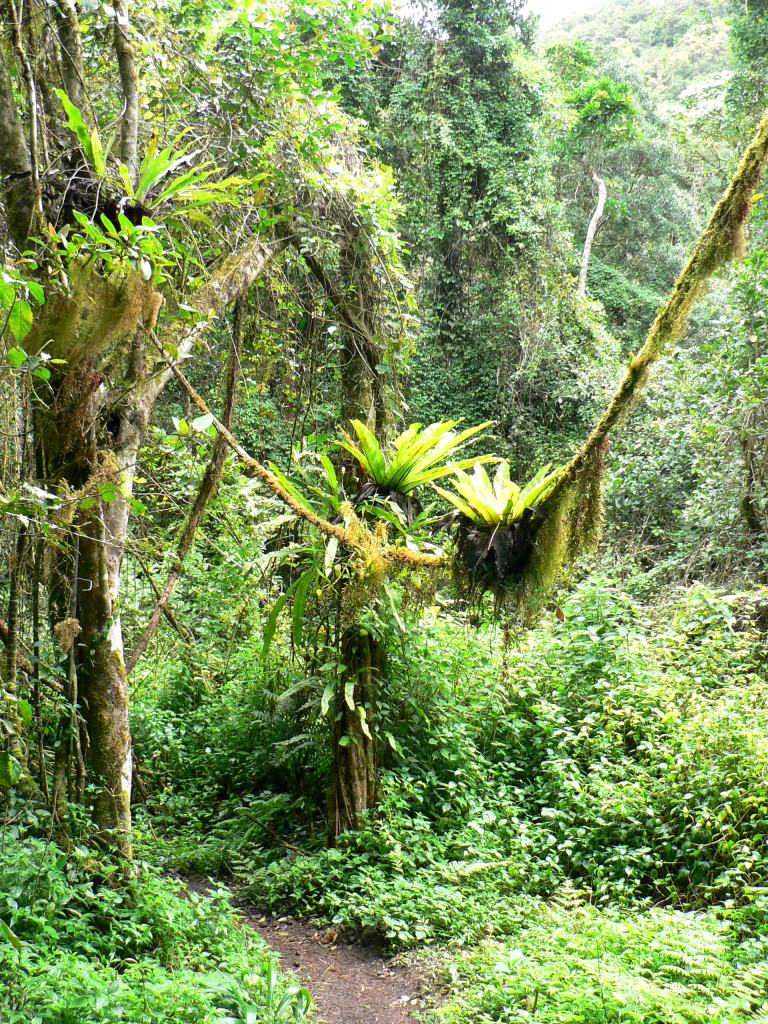 Mada rainforest Ranomafana