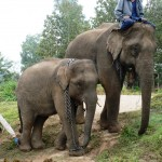 Mahout and charges