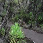 Mt Kili trail Day 5 descent