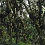 Mt Kili trail Day 6