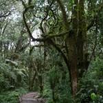 Mt Kili trail day 1