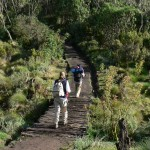 Mt Kili trail day 2