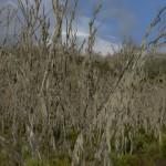 Mt Kili trail heath