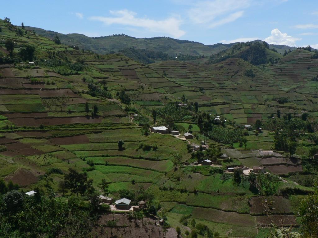 Plantations Uganda