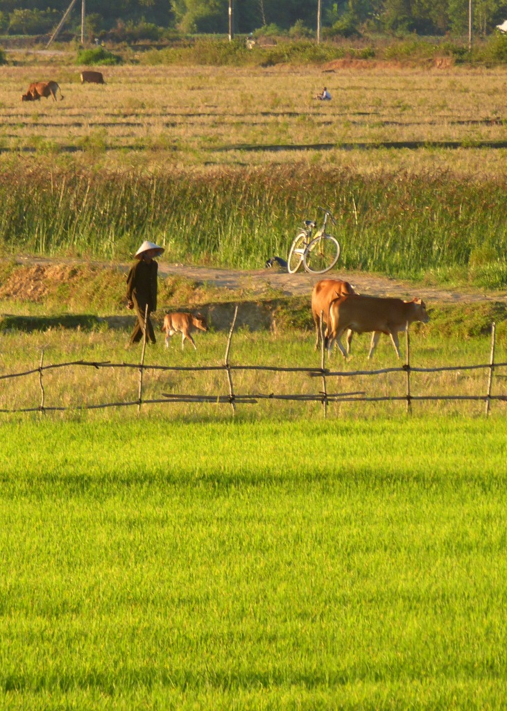 Rural scenes Phong Nha