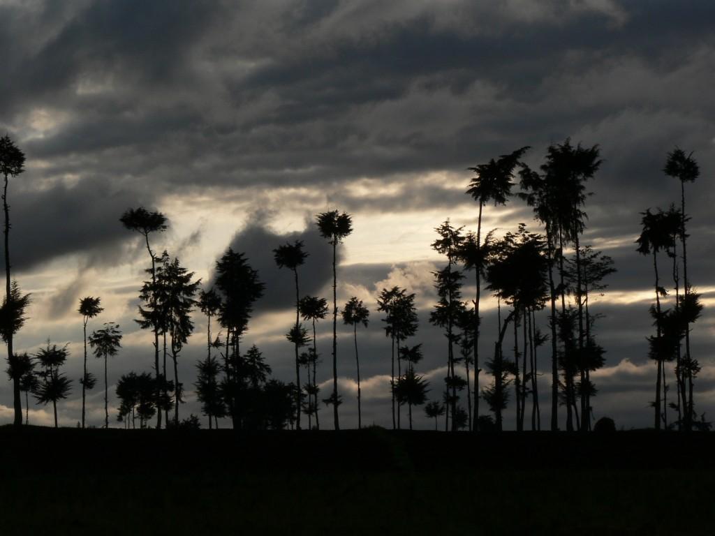 Rwanda trees at sunrise