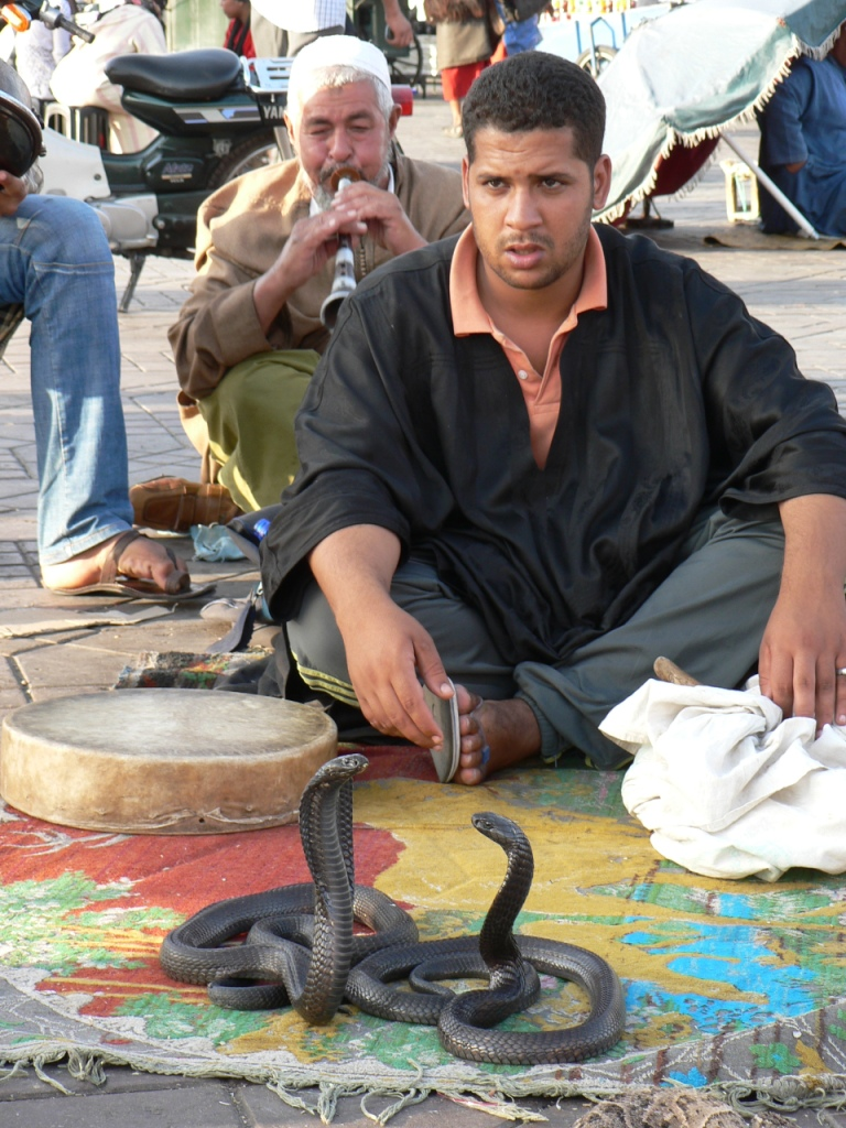 Snake charmer Marrakesh