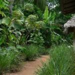 Spice plantation Zanzibar