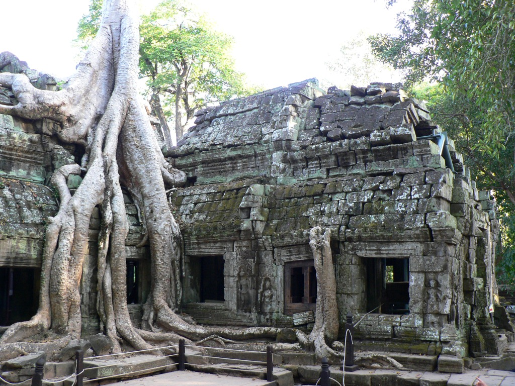 Ta Prohm Temple reclaimed