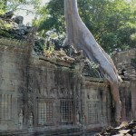 Tree roots reclaim Preah Khan