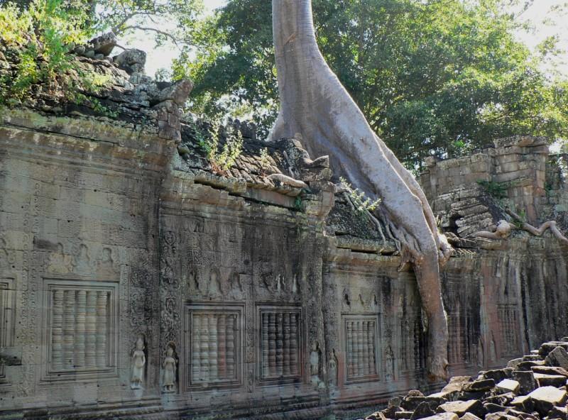 Tree roots reclaim Preah Khan