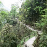 Walkers Mt Emei trail
