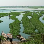 Watercress farming Cambodia