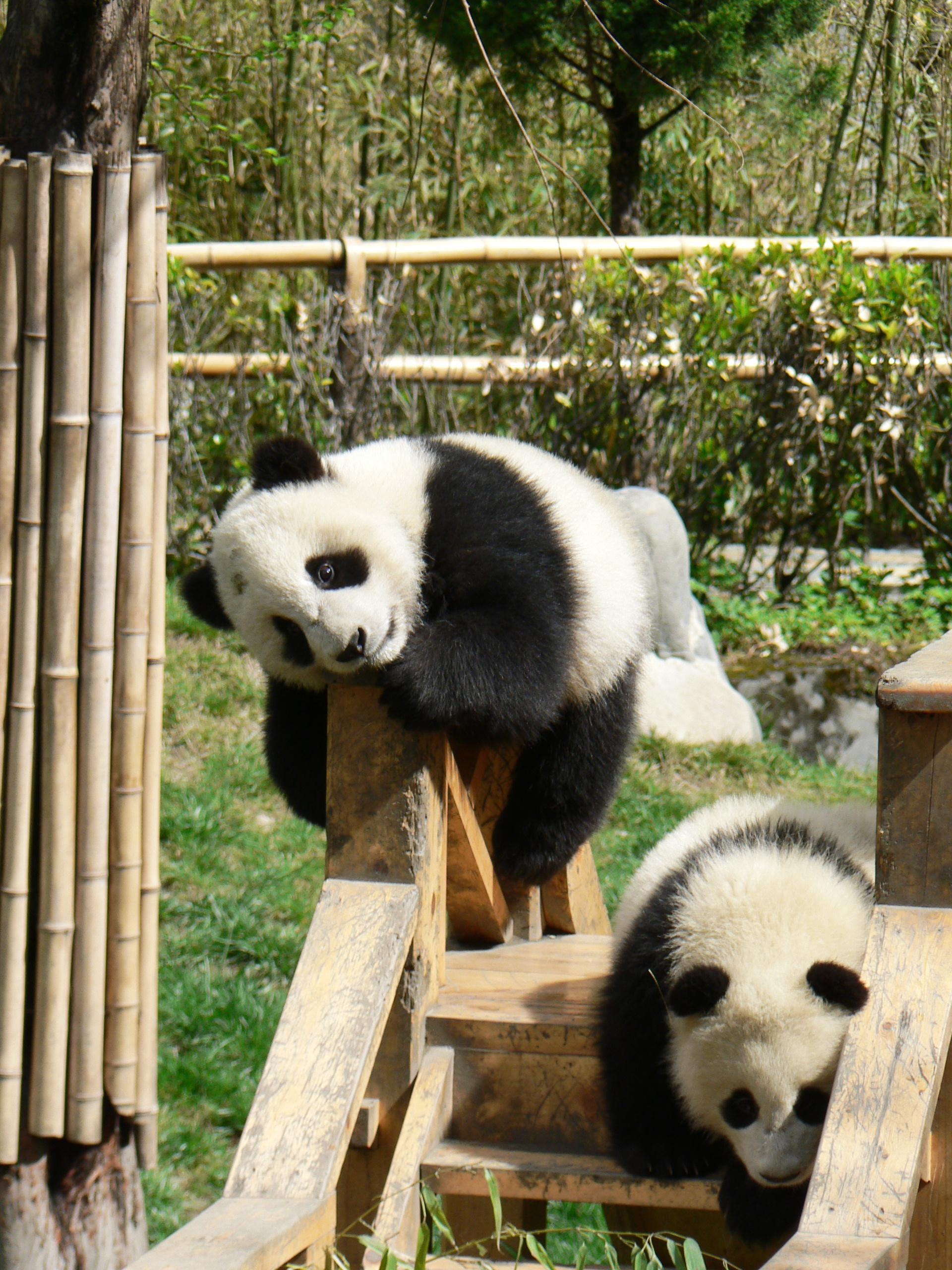 Wolong panda nursery