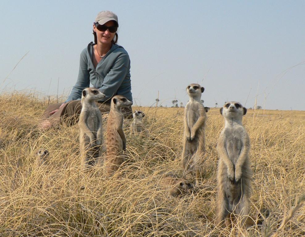 meerkat crew