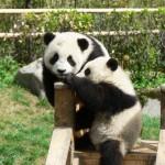 panda nursery2