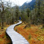 Wetlands Mosses Milford Track