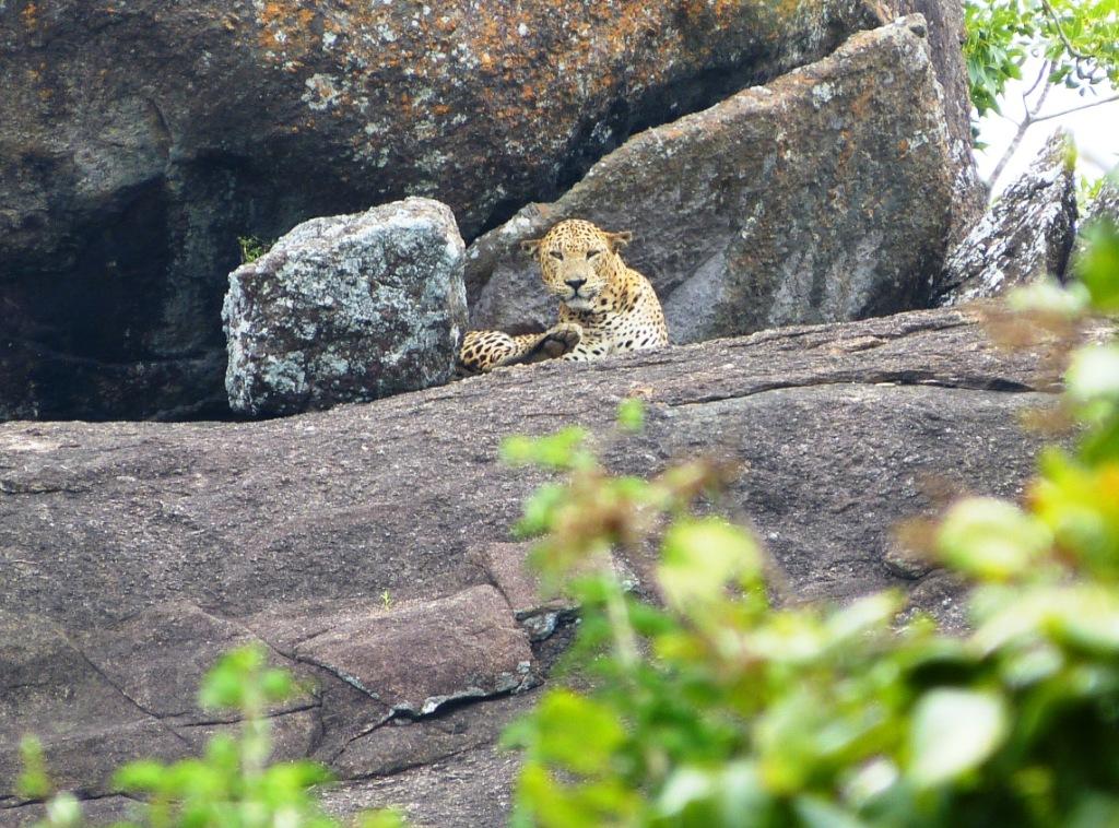 The leopard's spots Yala NP