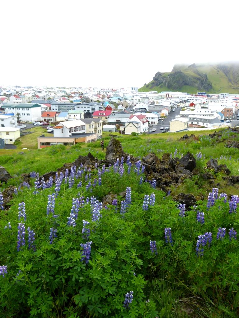 views from Eldfell volcano Vestmannaeyjar