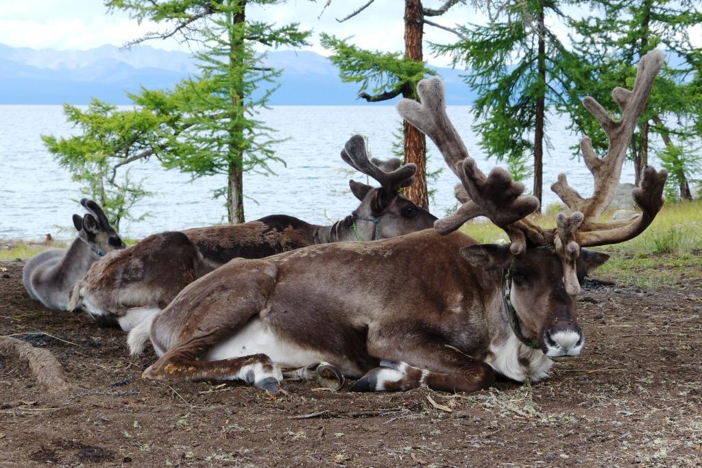Reindeer family Lake Khuvsgul