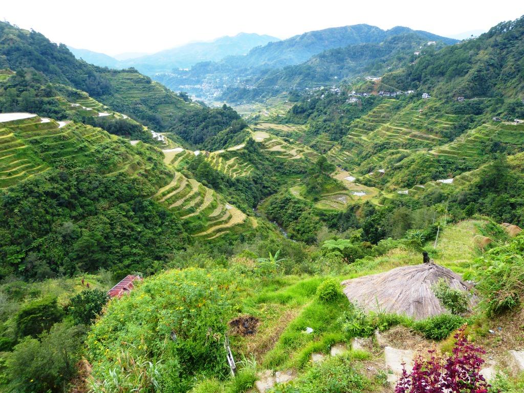 Ifugao rice terraces