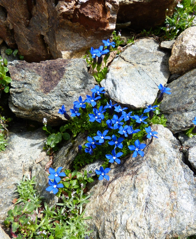 Blue wildflowers on the trail