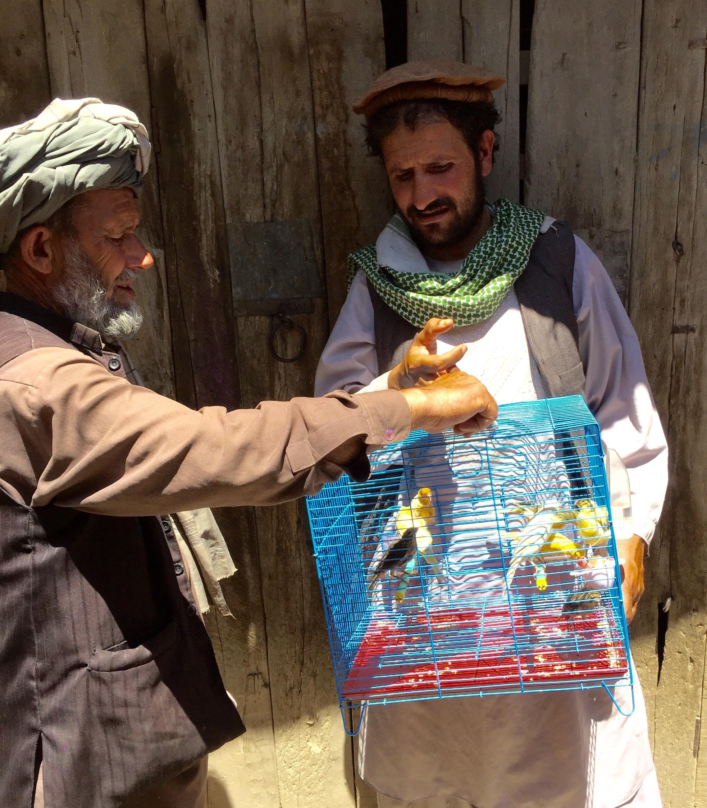 Bird seller Kabul