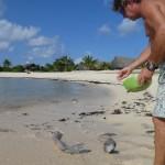 Feeding moray eels