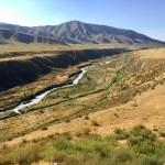 Golden grass on the steppe