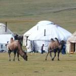 Nomads caravan