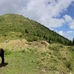 Alpine Valleys Kyrgyzstan