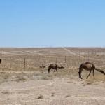 Traffic jam Turkmenistan