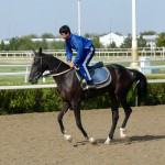Turkoman horse bloodline of current day thoroughbreds