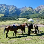 Horseriding Shamsy Valley